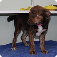 Adopt A Pet :: TN/Mocha - Atlanta, GA