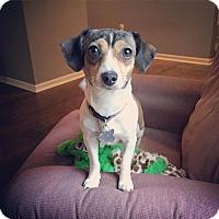Adopt A Pet :: Missy Elliott - Grand Rapids, MI