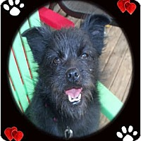 Adopt A Pet :: Dillon - Cincinnati, OH