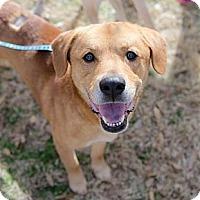 Adopt A Pet :: Yogi Bear - Cumming, GA
