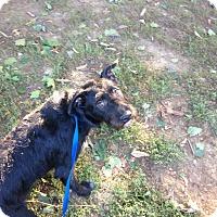 Adopt A Pet :: Larry James - Rockaway, NJ