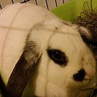 Adopt A Pet :: Maggie - Moneta, VA