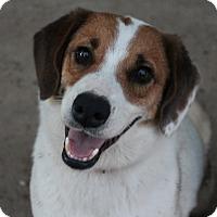 Adopt A Pet :: Snoopy - Owasso, OK