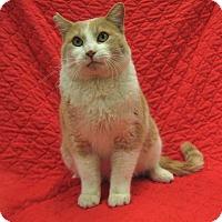 Domestic Shorthair Cat for adoption in Redwood Falls, Minnesota - Brett