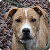 Adopt A Pet :: Chance - Spring Valley, NY