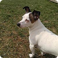 Adopt A Pet :: Blossom - Florence, KY