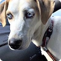 Adopt A Pet :: Skye - Bernardston, MA
