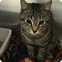 Adopt A Pet :: Mowgli - Richboro, PA