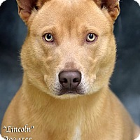 Adopt A Pet :: Lincoln - Newnan City, GA