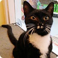 Adopt A Pet :: Sukura - Rocky Hill, CT