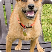 Adopt A Pet :: Griffey - Patterson, CA