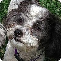 Adopt A Pet :: Bogie - La Costa, CA