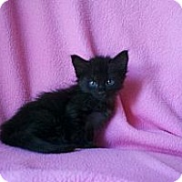 Adopt A Pet :: Barniee - Phoenix, AZ