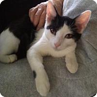 Adopt A Pet :: Sonic - Colorado Springs, CO