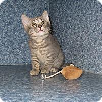Adopt A Pet :: Hallie - Harrisburg, NC
