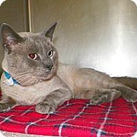 Adopt A Pet :: Rocco - Dover, OH