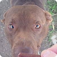 Adopt A Pet :: Luther - Houston, TX
