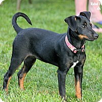 Adopt A Pet :: Lola - Quincy, IN