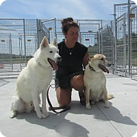 Adopt A Pet :: kavik and Laskin - Cornwall, ON