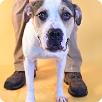 Adopt A Pet :: Albany - Covington, LA