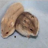 Adopt A Pet :: A1675497 - Los Angeles, CA