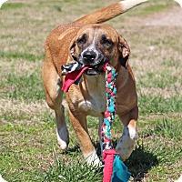 Adopt A Pet :: Vickie - Savannah, TN