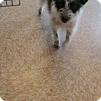 Adopt A Pet :: Dasie - LAKEWOOD, CA