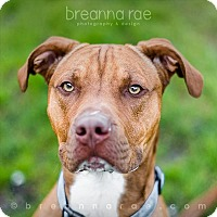 Adopt A Pet :: Choppo - Sheboygan, WI