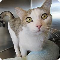 Adopt A Pet :: Nick - Sierra Vista, AZ