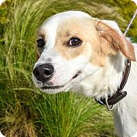 Adopt A Pet :: Cooper - Prince George, VA