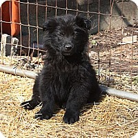 Adopt A Pet :: David - PENDING, in Maine - kennebunkport, ME