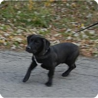 Adopt A Pet :: Kobe ADOPTED!! - Antioch, IL