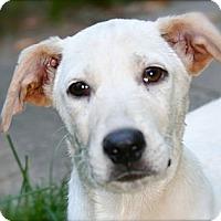Adopt A Pet :: Melo - Hastings, NY