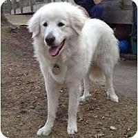 Adopt A Pet :: Erin - Minneapolis, MN