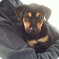 Adopt A Pet :: KOBE - Torrance, CA