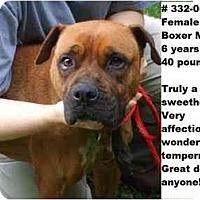 Adopt A Pet :: # 332-09 @ Animal Shelter - Zanesville, OH