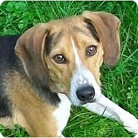 Adopt A Pet :: Tramp - Indianapolis, IN
