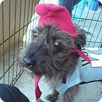 Adopt A Pet :: Santiago - Miami, FL