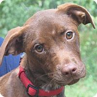 Adopt A Pet :: Magnolia - Allentown, PA