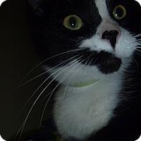 Adopt A Pet :: Sweet Pea - Hamburg, NY