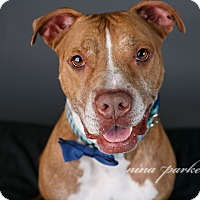 Adopt A Pet :: Buddy - Atlanta, GA
