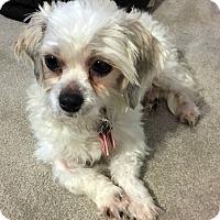 Adopt A Pet :: Mickey - Toronto, ON