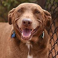 Adopt A Pet :: Rella - Kanab, UT