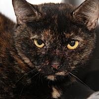 Adopt A Pet :: Tori - Marietta, OH