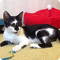 Adopt A Pet :: A..  Emery - Mooresville, NC