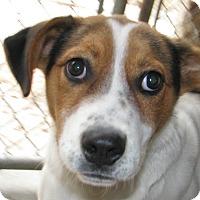 Adopt A Pet :: Jive - Ruidoso, NM