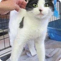 Adopt A Pet :: Emerald - Reeds Spring, MO