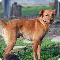 Adopt A Pet :: Shandy - Staunton, VA