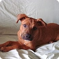 Adopt A Pet :: Penny - Madison, WI