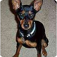 Adopt A Pet :: Lola - Nashville, TN